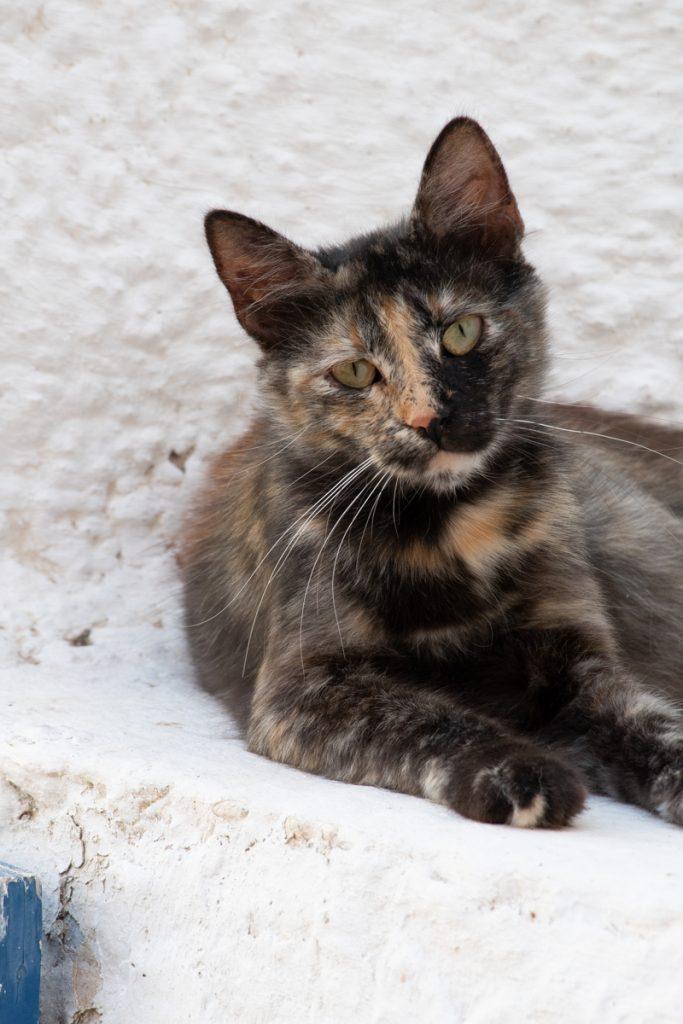 Syros Urlaub - Katze